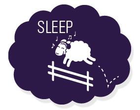 sleep_sheep.jpg